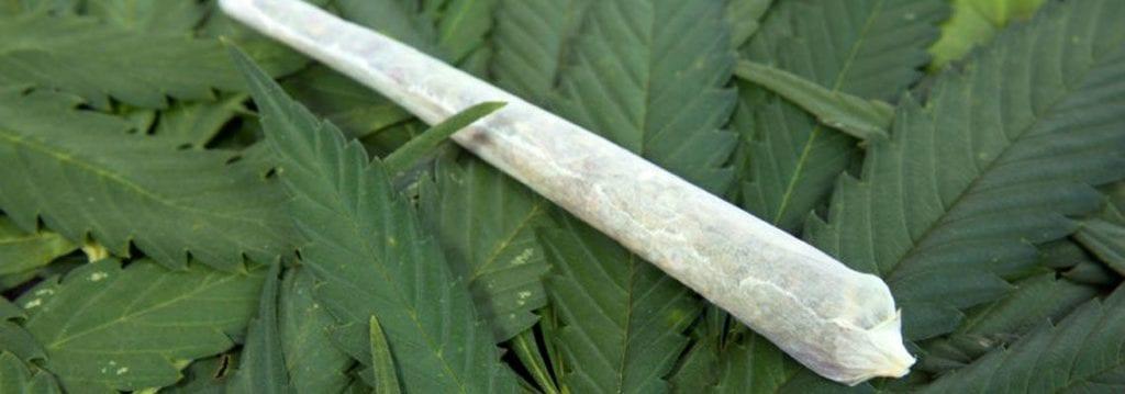 Лечение зависимости от марихуаны 19
